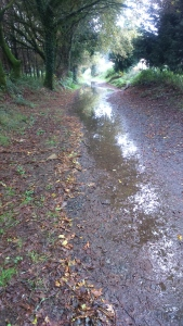 Wet pathways reflecting the forest