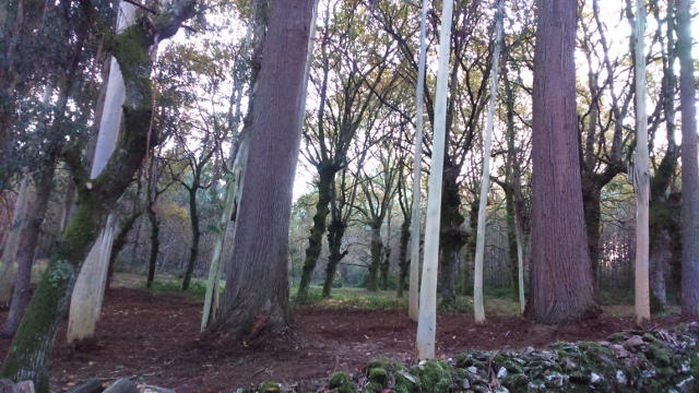 Spain autumn 2016 phone 3983 (640x360)