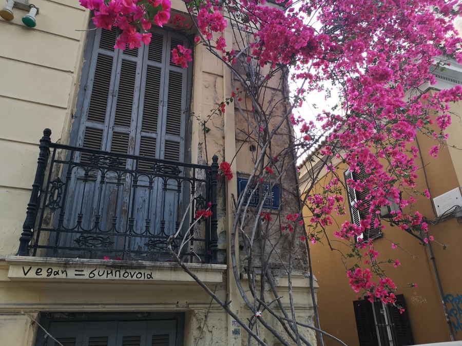 Iron work balcony with trailing magenta bouganvillia