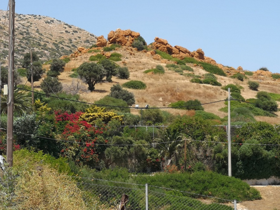 Mountainsides with olive trees, crags and flowers