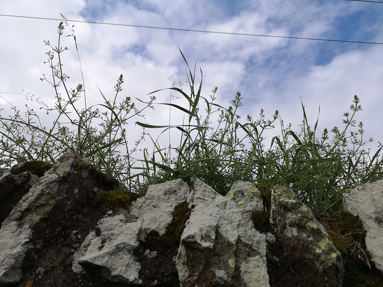 Blue sky with plants and wall