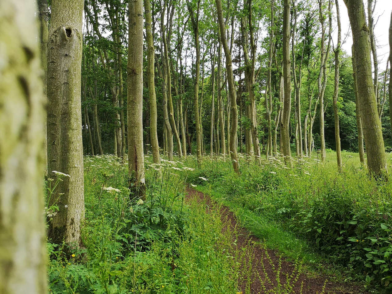 tree trunks and grassy path