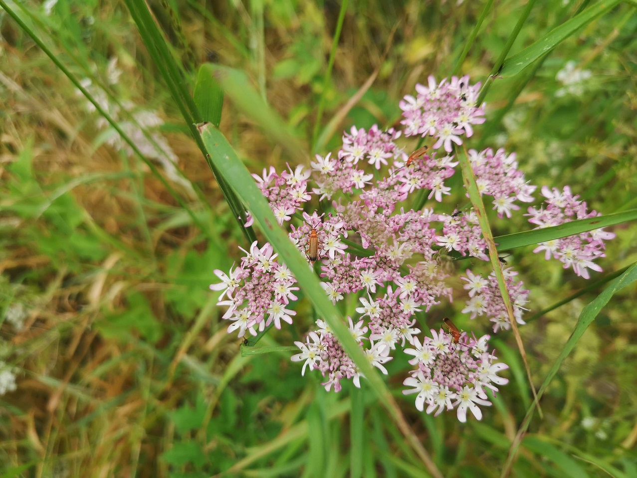Clusters of wild flowers