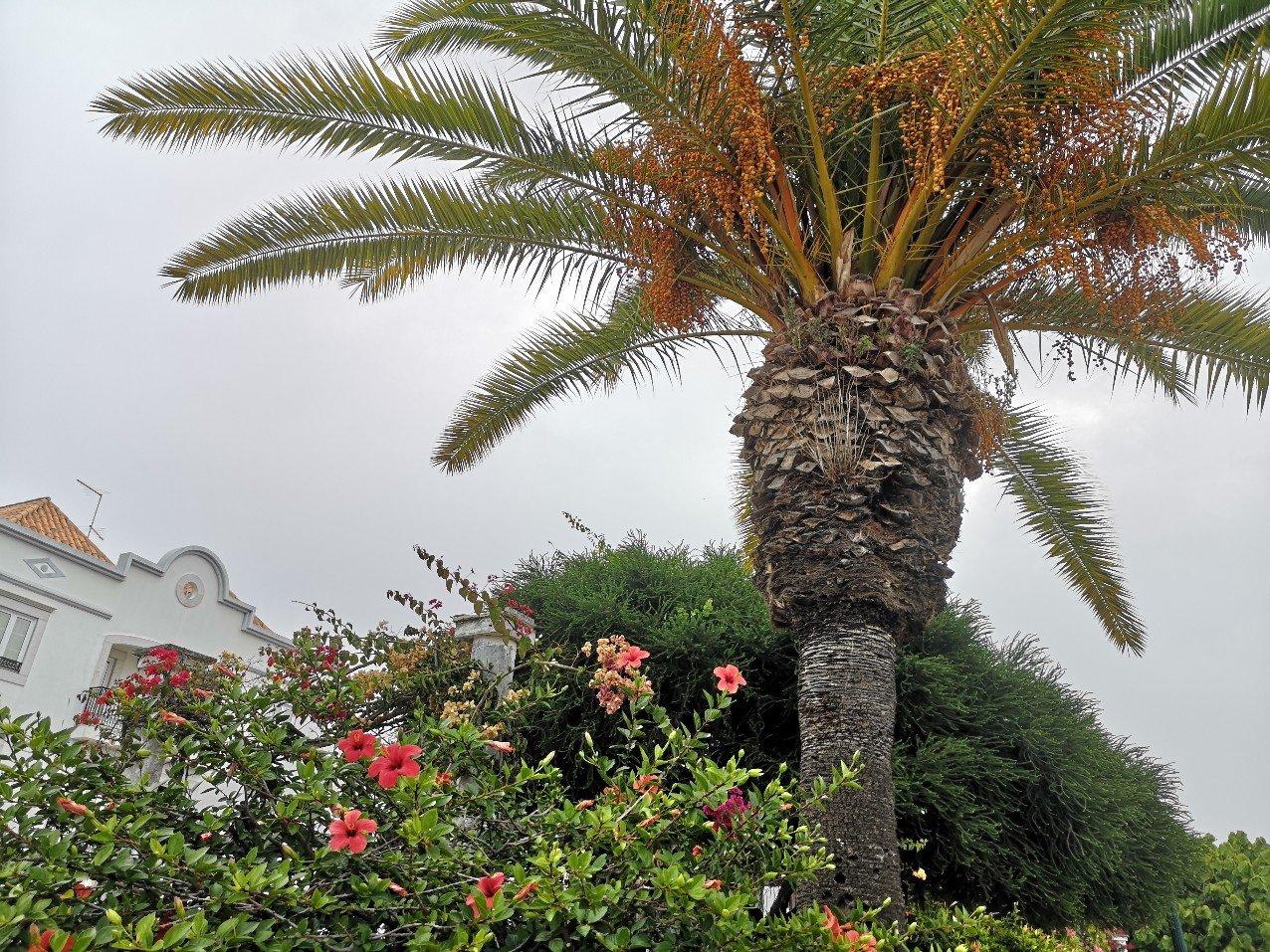 palm tree hibiscus