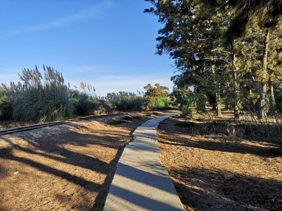 path in woods Praia do Barril beach